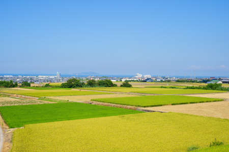 summer. Rural landscape. Seto Inland Sea in the distance(Kanonji City, Kagawa Prefecture)
