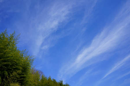 Early spring sky. Bamboo forest Stock Photo
