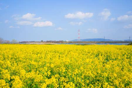 Rape field and Yoshino River(Kamiita Town, Tokushima Prefecture) Stock Photo