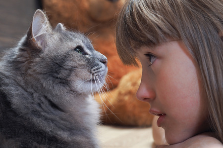 The child, a girl, looking at the cat. The face and muzzle cat largly. Grey Cat with green eyes. Bright girl with brown eyes. Child and animal