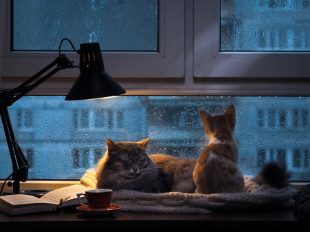 sleeping animals: Cats in the window. Outside, rain, water drops on the glass. Twilight shines a desk lamp. It should be a cup with a drink, it is an open book. Cozy and warm. Small kitten looking in the window at the rain and drops on glass Stock Photo