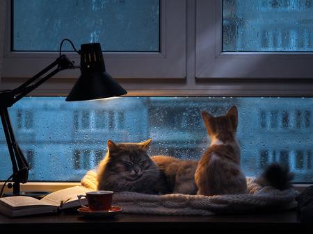Gatos en la ventana. En el exterior, la lluvia, gotas de agua sobre el vidrio. Crepúsculo brilla una lámpara de escritorio. Debe ser un vaso con una bebida, es un libro abierto. Acogedor y cálido. Pequeño gatito que mira en la ventana la lluvia y las gotas sobre el vidrio