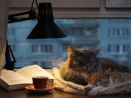 Les chats dans la fenêtre. Dehors, la pluie, les gouttes d'eau sur le verre. Pénombre, inclus une lampe de bureau. Il devrait être une tasse avec une boisson Banque d'images - 53951117