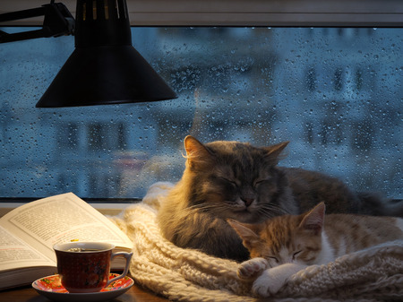 Cats in the window. Outside, rain, water drops on the glass. Twilight, included a desk lamp. It should be a cup with a drink