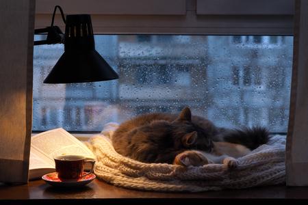Les chats dans la fenêtre. Dehors, la pluie, les gouttes d'eau sur le verre. Pénombre, inclus une lampe de bureau. Il devrait être une tasse avec une boisson Banque d'images - 53951122