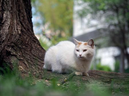 arbol de problemas: Gato de la calle sentado en la hierba cerca del árbol. El gato es blanco. Los animales enfermos, los ojos se infectan. El concepto del problema de los animales abandonados en las ciudades.