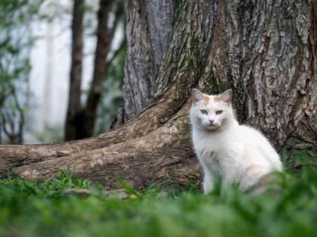 hobo: Street cat sitting in the grass near the tree. The cat is white. Sick animals, eyes fester. The concept of the problem of stray animals in the cities.