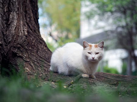 fester: Street cat sitting in the grass near the tree. The cat is white. Sick animals, eyes fester. The concept of the problem of stray animals in the cities.
