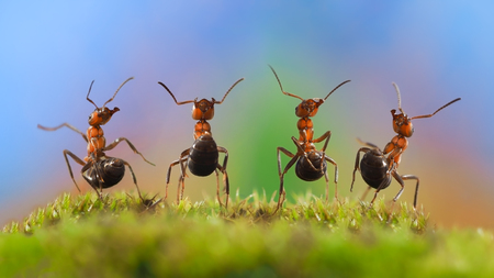 hunters: Four funny ant with their bellies. Ants dancing. Glade, moss. Beautiful rainbow background. The concept of performance, dance, show, concert