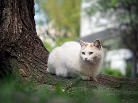 arbol de problemas: Street cat sitting in the grass near the tree. The cat is white. Sick animals, eyes fester. The concept of the problem of stray animals in the cities.