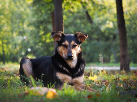 stray: Stray dog ??in the park. Autumn Stock Photo