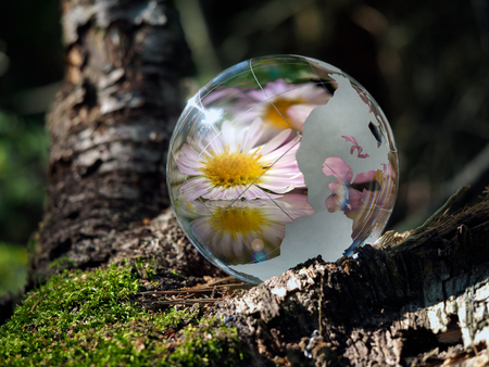 glass sphere: Transparent bowl and reflection beautiful flower in the green forest. Glass - a material, concepts and themes, relaxation, meditation, tranquility, life Stock Photo