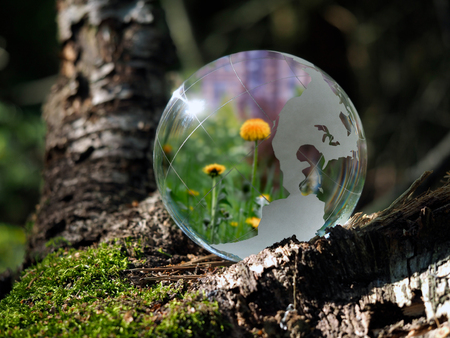 Dandelion flowers are carried in a transparent bowl. Sphere in the woods on moss. The concept of the environment, horticulture, ecology, spring Stock Photo