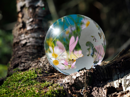 Many flowers and blue sky reflected in a transparent bowl. Sphere in the woods on moss. The concept of the environment, horticulture, ecology, spring Stock Photo