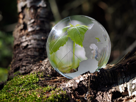 Environment concept. The plant is is in a transparent ball on the moss