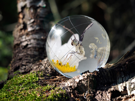 Transparent ball and flip it - butterfly on a flower. Sphere in the woods on moss. The concept of the environment, wildlife, ecology