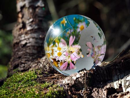 Veel bloemen en blauwe hemel weerspiegeld in een transparante kom. Bol in het bos op mos. Het concept van het milieu, tuinbouw, ecologie, de lente