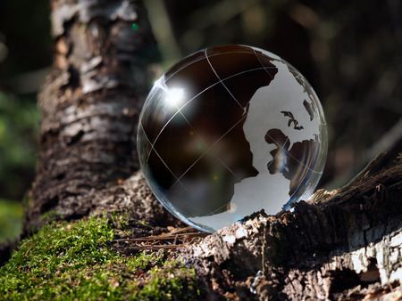 fragile peace: Brown ball sphere into the woods on moss. The concept of ecology, the environment, the protection of forests
