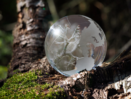 macrocosm: Little macrocosm inside a transparent ball in the forest. Reflection of lichens