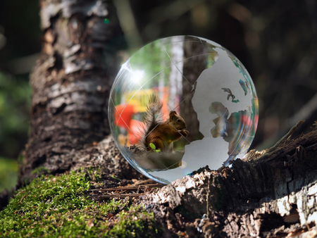 endangered species: Ball Sphere in the woods on moss. Reflection - animal protein. The concept of animal welfare, the preservation of endangered species, endangered animals, ecology Stock Photo