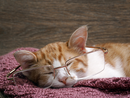 funny glasses: Funny kitten with big glasses Stock Photo