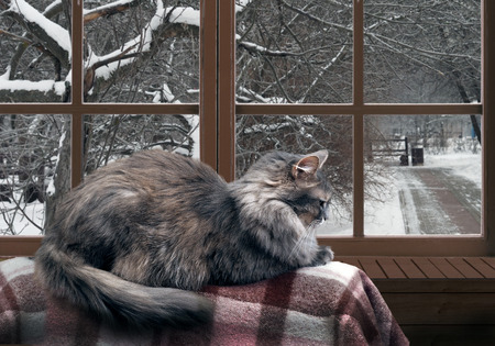 balcony window: Cat on the balcony at the window. Outside the window, snow, winter, trees in the park. Cat large, gray, furry