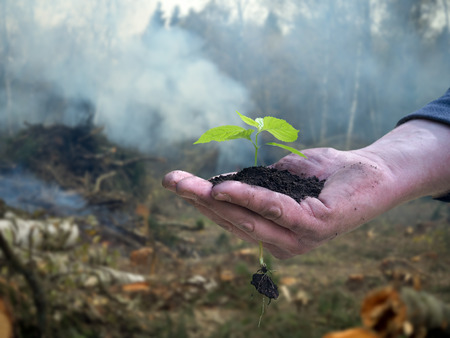 felling: Men working hand holds a young plant. Background - tree felling, cutting of trees, smoke. The concept of environmental protection, forest, ecology