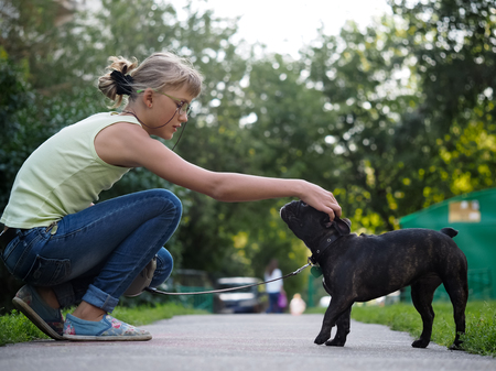 stroked: She stroked the dog while walking. Street of the city, summer. French Bulldog in black with a collar and leash