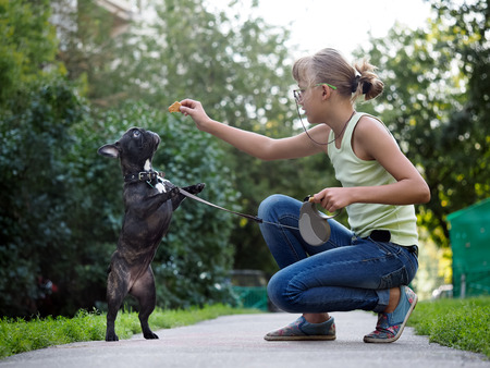 beg: Girl walking a dog and to train. Puppy jumping for treat. Street of the city, summer. French Bulldog in black