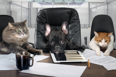 humor: Businessmen in office. Dog head and cat - employees, managers. Different characters personality. The concept of career growth, business, humor, advice, pet products