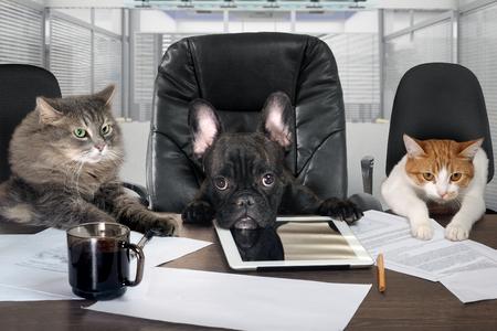 Hommes d'affaires en poste. Chien tête et chat - employés, gestionnaires. Personnalité de différents personnages. Le concept de croissance de carrière, les affaires, l'humour, les conseils, les produits pour animaux de compagnie Banque d'images - 61500369