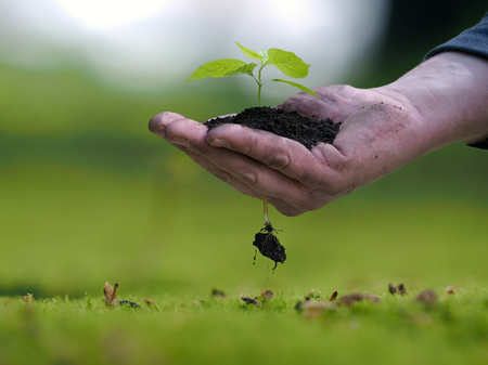 earth handful: Mans hand holding a plant, a handful of earth. The root of the little germ. The concept of ecology, landscaping, environmental protection