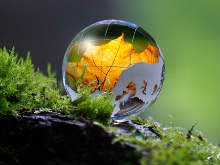 Large clear glass ball lying on the moss. Reflection of an autumn orange maple leaf. Concept - time of the year, autumn, beauty, ecology, protection