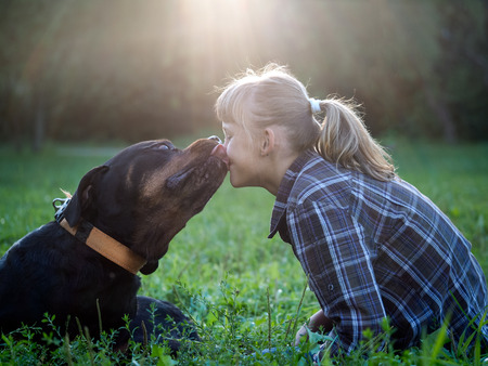 Huge Rottweiler dog kisses a young girl. Evening, the sun's rays, park