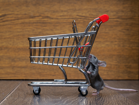 unsafe: Grocery supermarket trolley and gray mouse. Concept - pet products, supermarket or online. Stock Photo
