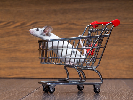 Grocery supermarket trolley and white mouse in a basket. Concept - pet products, supermarket or online.