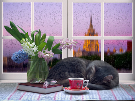 city of sunrise: Cat sleeping near the window. A cup with a drink - tea or coffee, a book, a bouquet of flowers. Outside, the city, rain, water drops on the glass. Dawn. Comfortable, fantastic atmosphere.