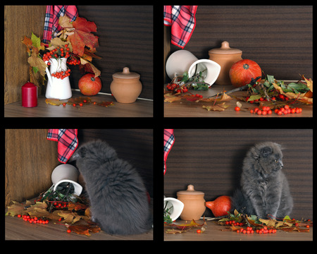 autumn cat: Collage - autumn still life with a cat bully