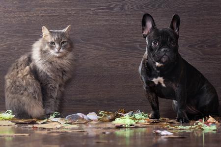 Blame den Hund und die Katze unter den Stücken von Papier und Müll in Erwartung der Strafe
