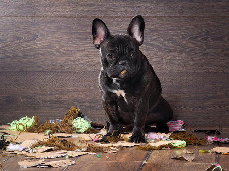 blame: Blame the dog among the pieces of paper and trash in anticipation of punishment