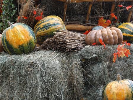 fall harvest: Pumpkins on hay. Concept - fall, farm, harvest festival