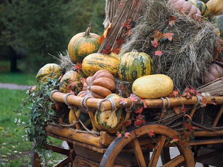 fall harvest: Pumpkins and sheaves of hay in a rustic cart. Concept - fall, farm, harvest festival