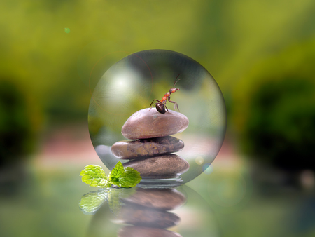 transparent globe: Cairn inside a transparent globe on a green natural background. Ant and mint leaves. The concept of ecology, freshness, environment