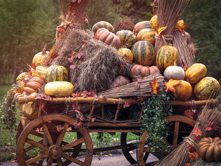 Rustic wagon laden with pumpkins and hay. Autumn farmers crop