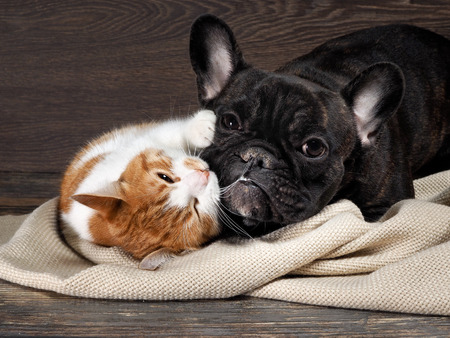 Funny cat and dog lying on the floor, playing hugging each other