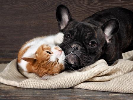 gato y perro divertidos tumbado en el suelo, jugando abrazándose unos a otros