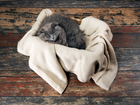 grey rug: Gray fluffy kitten sleeps in a box on a rug. Old wooden floor. View from above