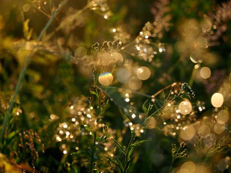 glare: Background sunset, nature, sun glare and plants