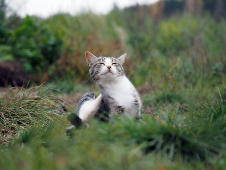 Satisfied Cat in the green grass. Cat scratched
