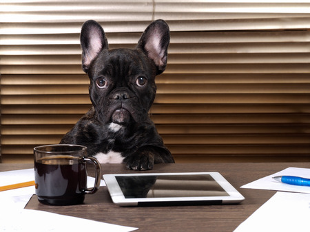 Dog at the table in the office. The tablet of coffee, paper